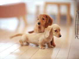 ペットに優しい床リホーム